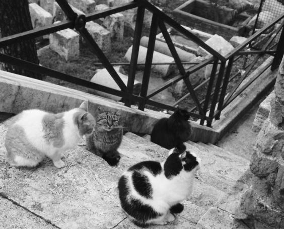 catsanctuary2